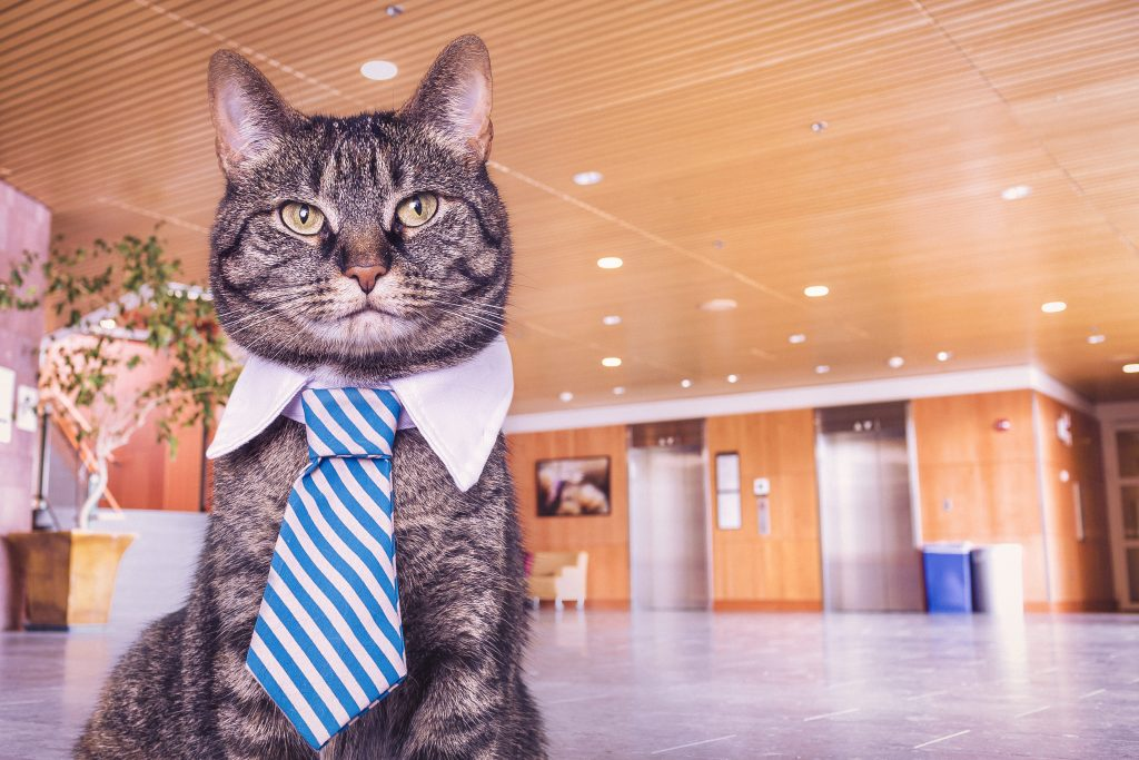 Cat in business casual