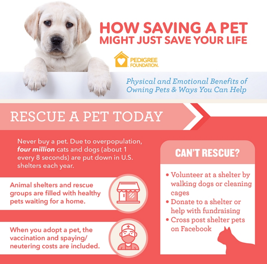 An infographic created for the PEDIGREE Foundation that illustrates how individuals can help pets in need.