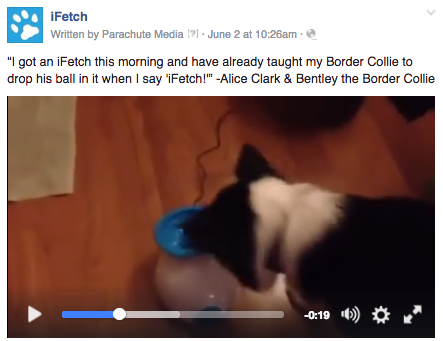 A customer shared her experience with her dog and the iFetch.