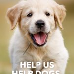 Marketing for Dog Brands - Help Us Help Dogs