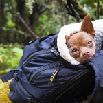Camping with Dogs Instagram Case Study