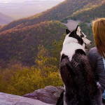 Dog and her human gazing at the sunset