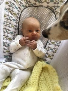 A baby in a rocker with friendly dog