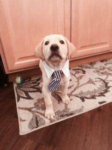 A puppy wearing a tie