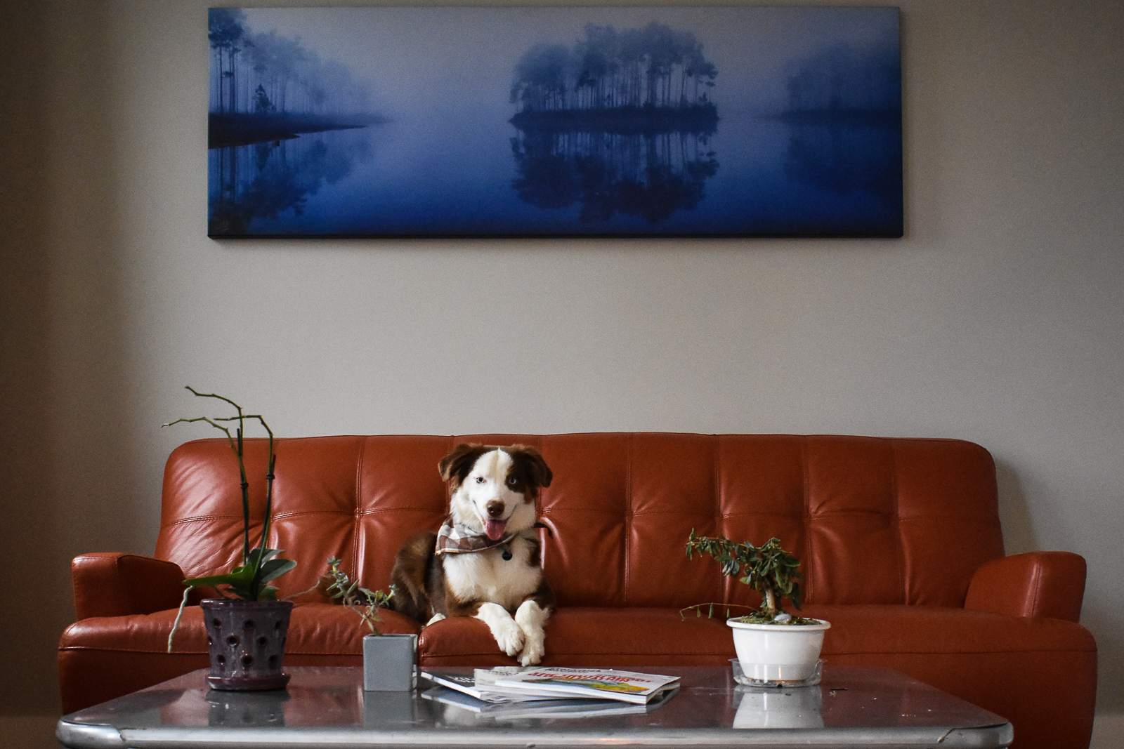 An artistic image of Sage the dog sitting on a couch