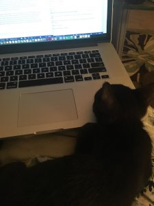 A kitten snuggling on a laptop