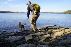 Sage the dog jumping into Percy Priest Lake.