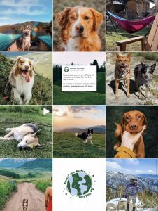 Screenshot of Camping With Dogs Instagram feed aesthetic - engagement