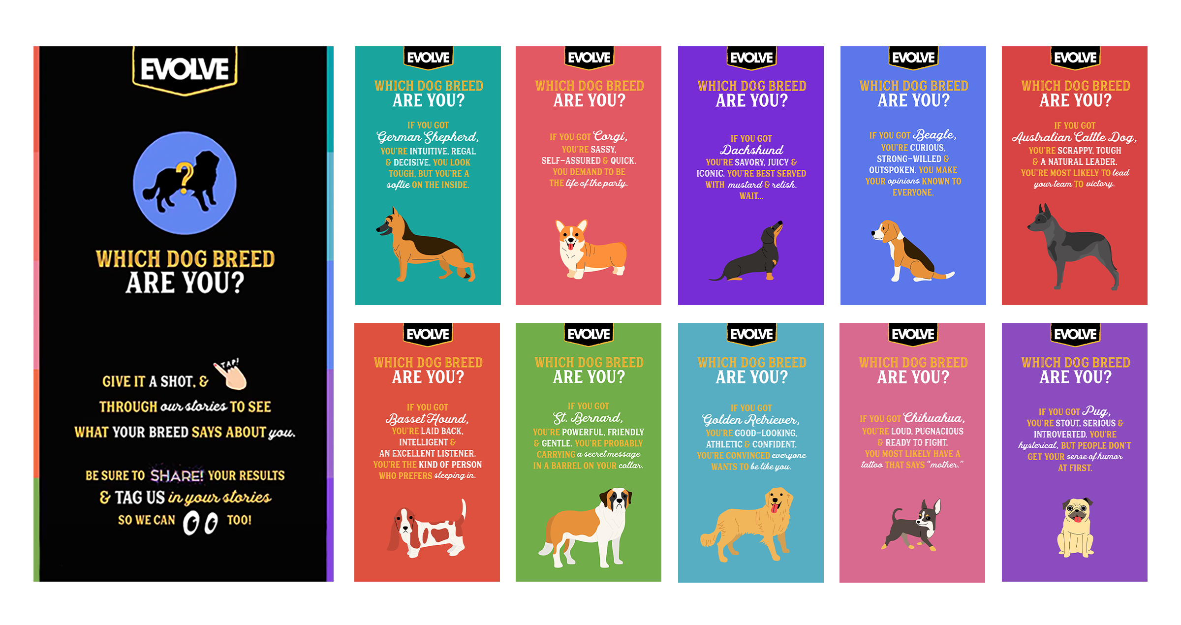 Display of AR filters and Stories created for Evolve Pet Food.