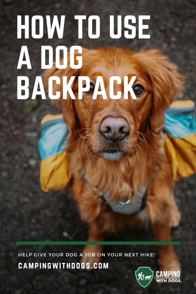 """An image of a dog wearing a backpack that includes the title """"How to Use a Dog Backpack."""""""