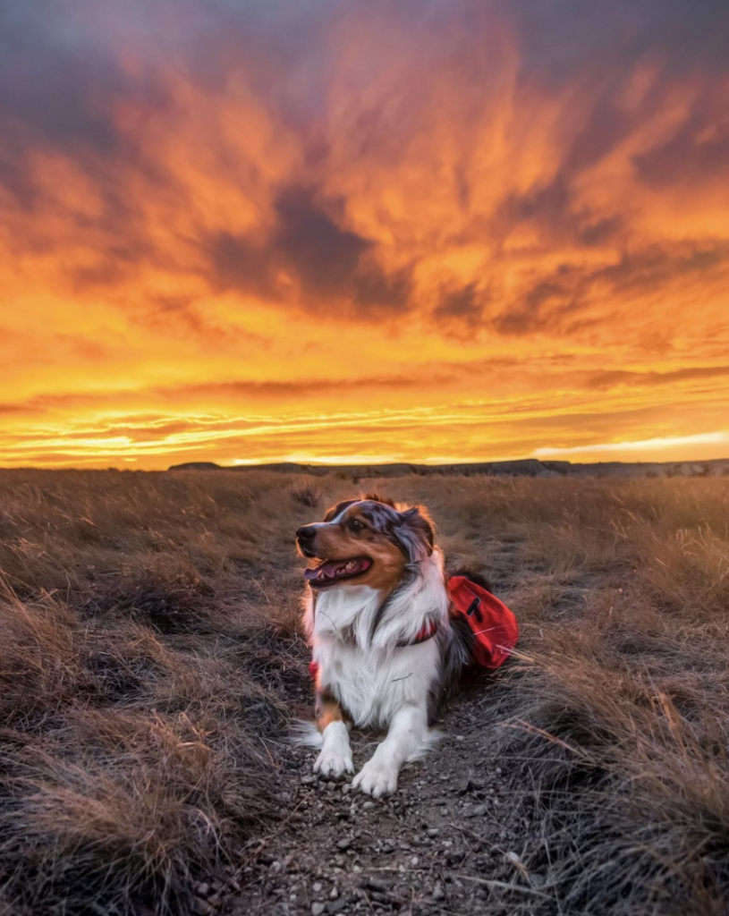 An image of a dog sitting in front of the sunset.